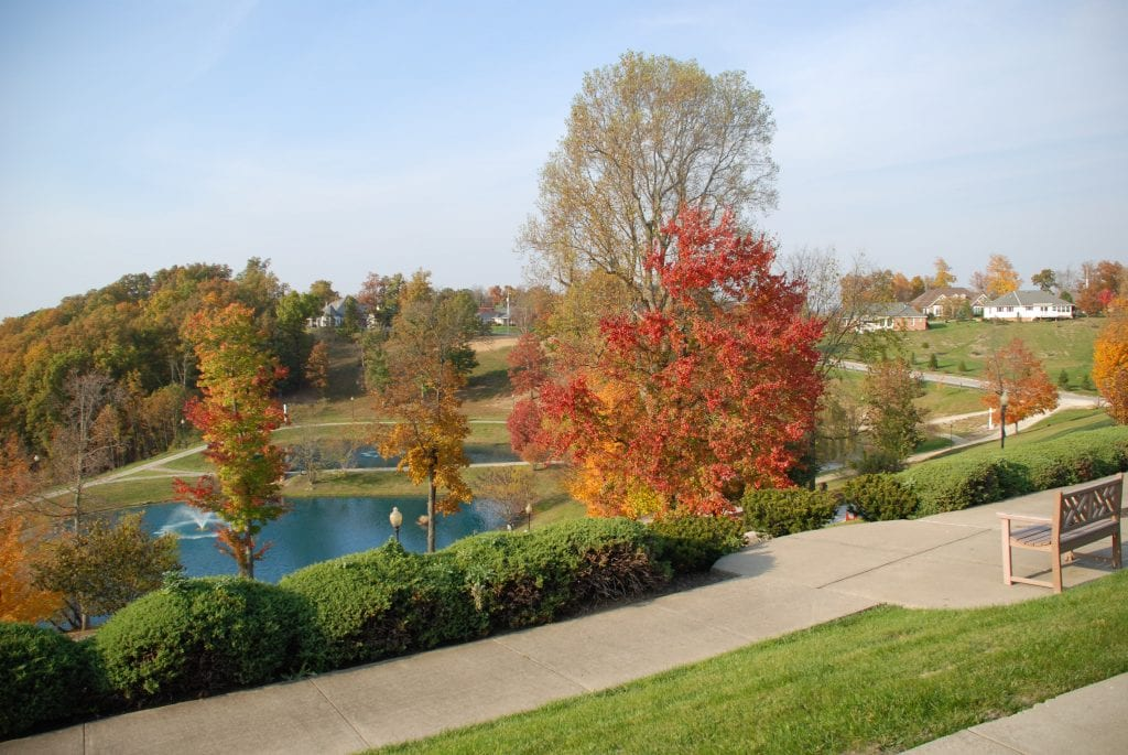 Woodlands in fall 2